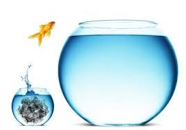 pez saltando pecera mayor